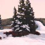 winterpine-640x212