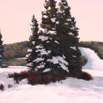 winterpine