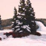 winterpine1-640x212